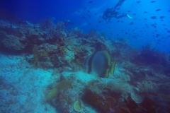 Kri Island diving