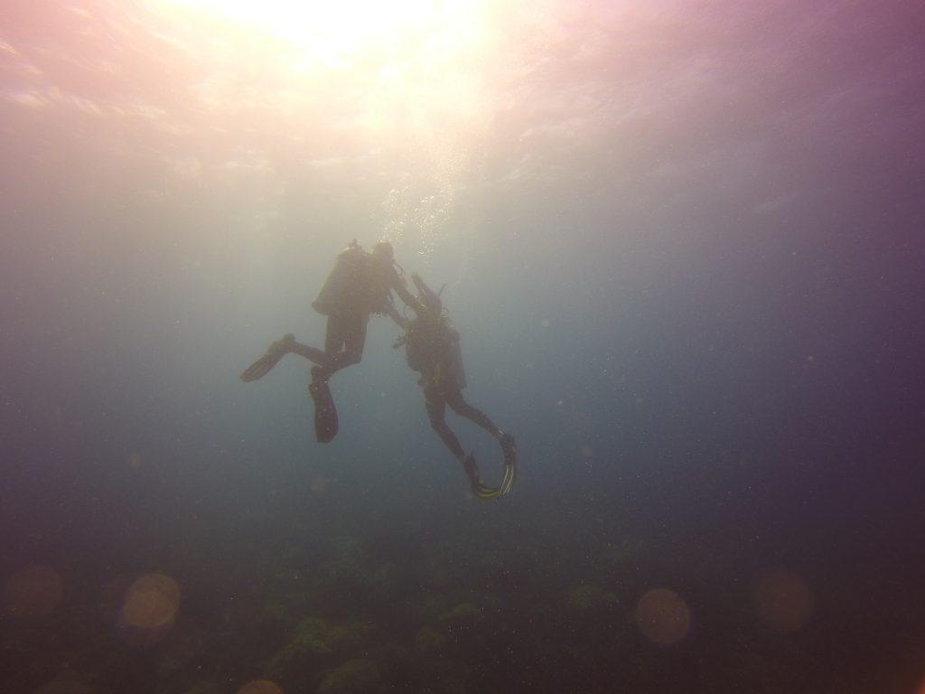 Apo Island Dive